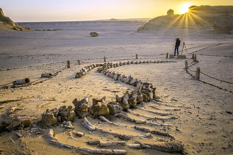 وادي الحيتان يرفع عدد زائري الفيوم 300% وينعش السياحة الداخلية خلال فترة كورونا